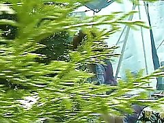 Peeping Tom Spots A Big Bush In The Garden